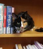 kočka v regálu - ilustrační obrázek